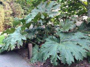 University of Washington Arboretum